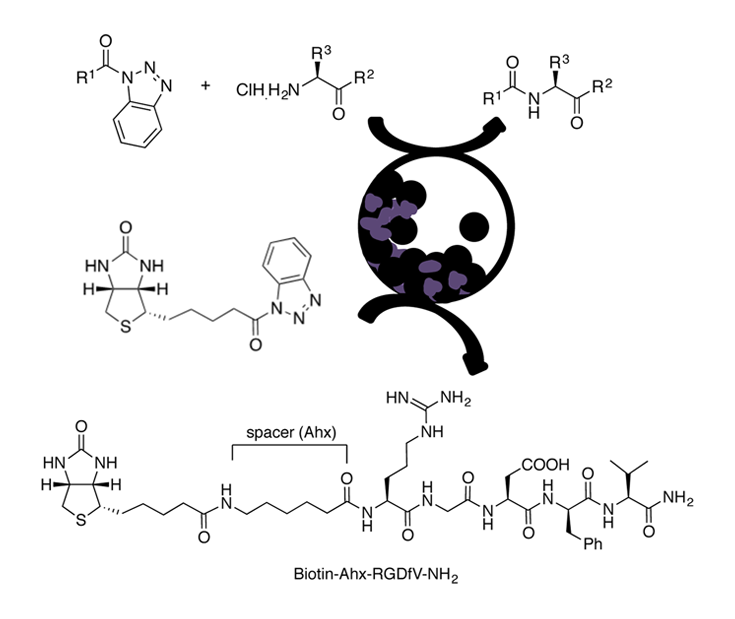 N-acyl benzotriazole derivatives for the synthesis of dipeptides and tripeptides and peptide biotinylation by mechanochemistry